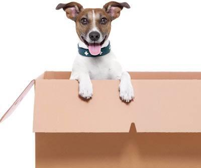 Pet Moving Tips